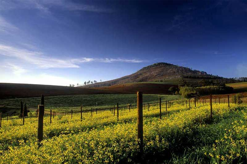 Wine farms Winelands